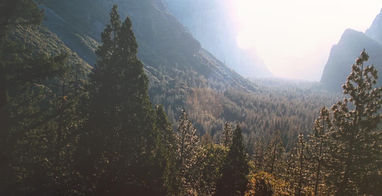 Coniferous Forest View